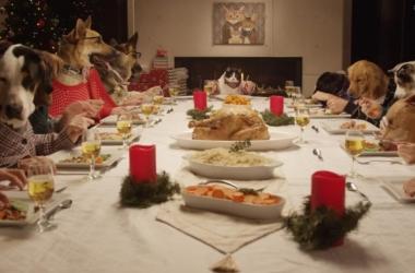 Как рассмешить гостей на Новый год 2015: посмотри, что едят животные за праздничным столом! (видео)