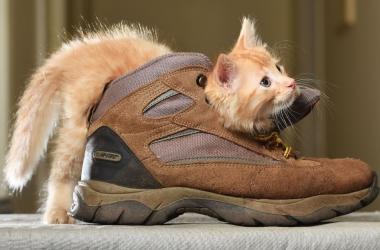 Смешные коты - лучший антидепрессант!