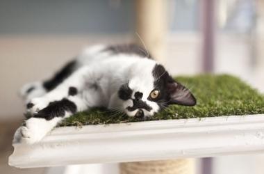 Весна пришла, а с нею и коты! Смешное видео для хорошего настроения