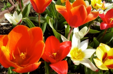 Короткие прикольные смс с 1 мая: поздравь друзей и близких!
