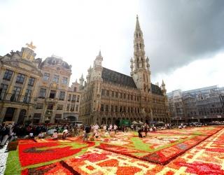 Гигантский ковер из живых цветов в Брюсселе