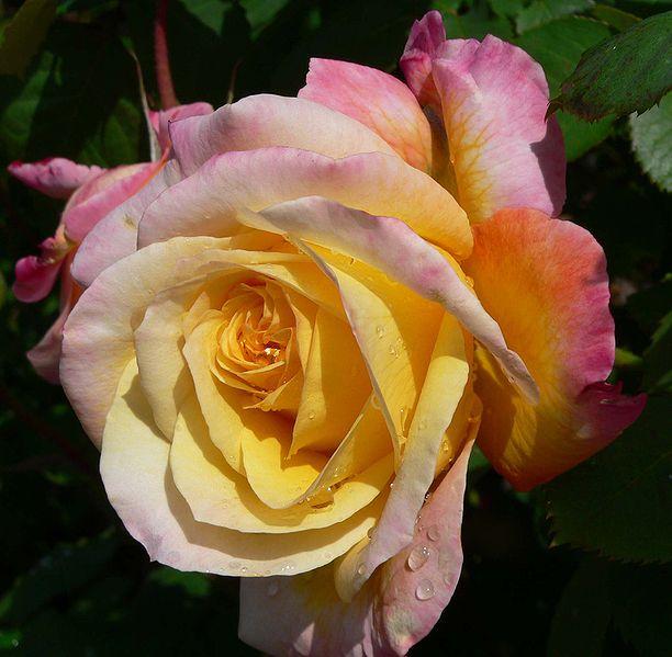Марта выбирай цветы по знакам зодиака