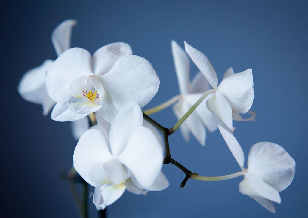 как вылечить орхидею