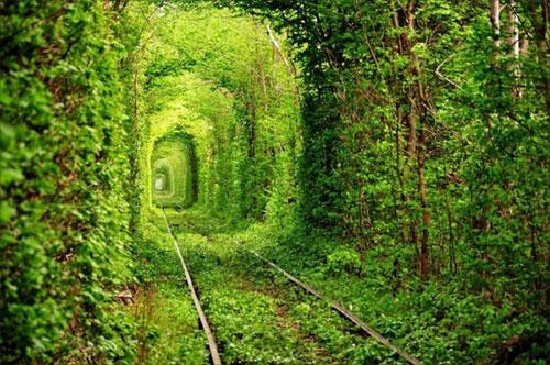 туннель любви. Ровенская область